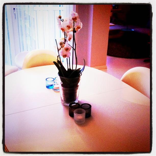 Orkide på spisebord