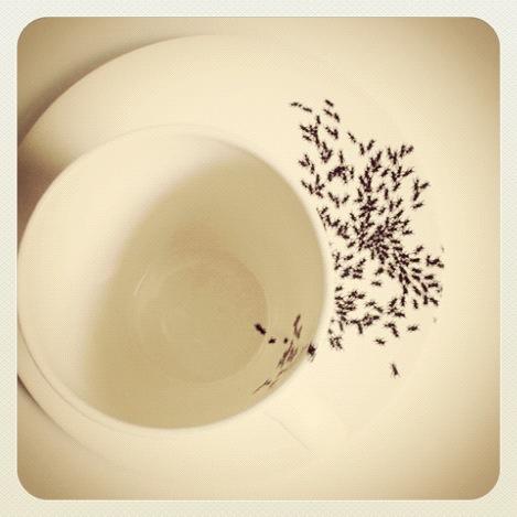 Ants on my mug