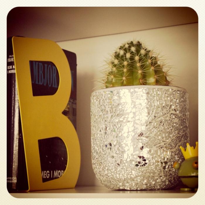 Kaktus i bokhyllen