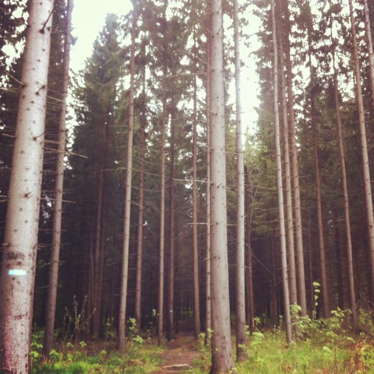 skogen rundt holmenkollen