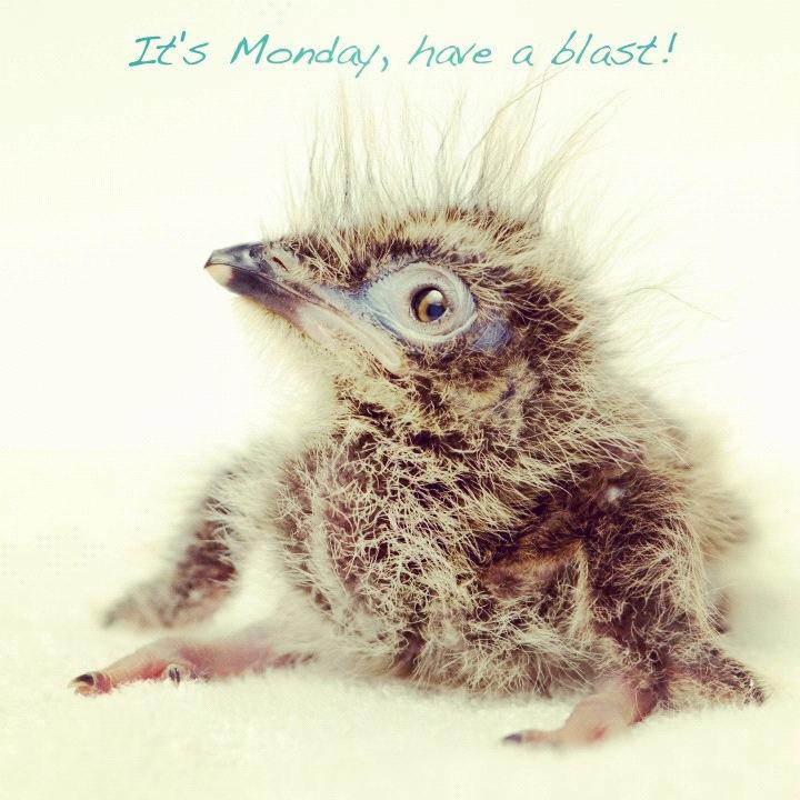 Det er mandag!