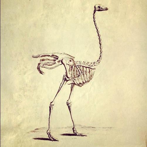 anatomiprint