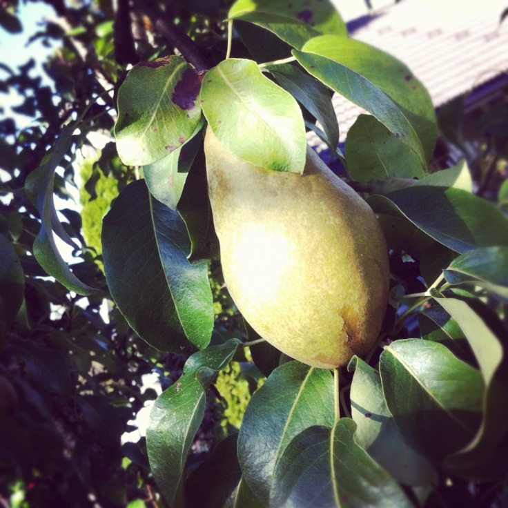 pæretre